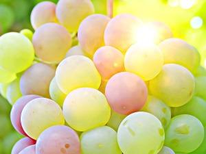 grape-2002848_960_720